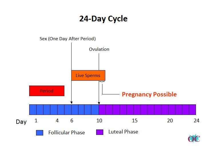 Your period cycle after sex